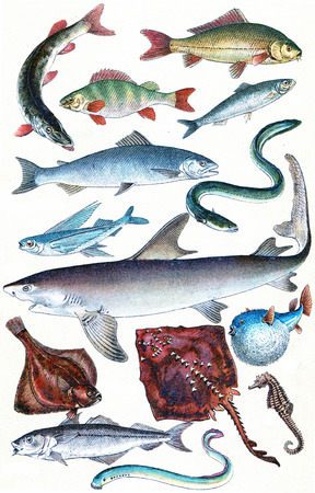 Legend Plate IX, vintage engraved illustration. La Vie dans la nature, 1890.