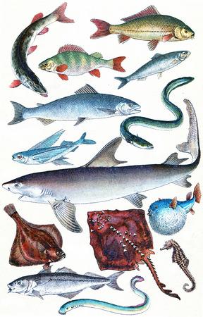 shark fin: Legend Plate IX, vintage engraved illustration. La Vie dans la nature, 1890.