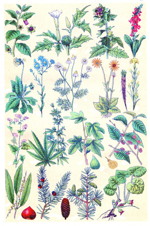 plants species: Leggenda XV Piatto, vintage illustrazione inciso. La Vie dans la nature, 1890.