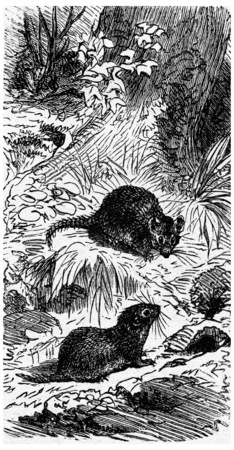 burrow: Field mouse and his house, vintage engraved illustration. La Vie dans la nature, 1890. Stock Photo