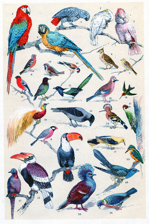 pajaritos: Placa de leyenda, ilustraci�n de la vendimia grabado. La Vie dans la nature, 1890.