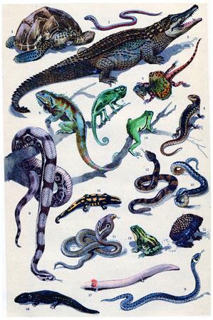 worm snake: Legend of Plate, vintage engraved illustration. From La Vie dans la nature, 1890. Stock Photo