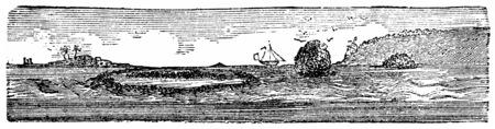 detritus: Coral Island, vintage engraved illustration. Natural History of Animals, 1880.