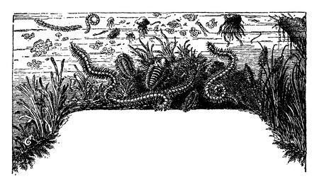 progression: Development and progression of life, vintage engraved illustration. Earth before man – 1886. Illustration