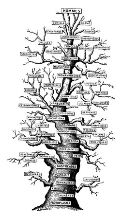 family: Family tree of life on earth, vintage engraved illustration. Earth before man – 1886.