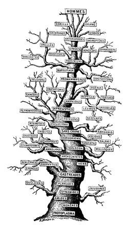 Stamboom van het leven op aarde, vintage gegraveerde illustratie. Aarde voordat de mens - 1886. Stock Illustratie