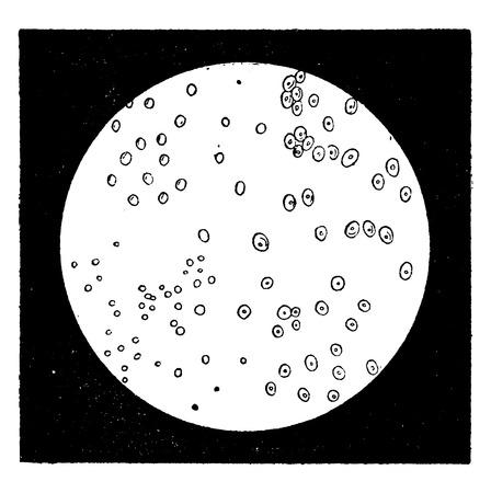 unicellular: Elementary diatomaceous. Monads, vintage engraved illustration. Earth before man – 1886. Illustration
