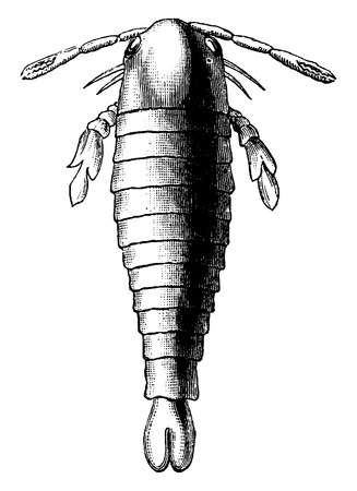 arthropod: First animals, Bilobus Pterygotus, vintage engraved illustration. Earth before man – 1886.