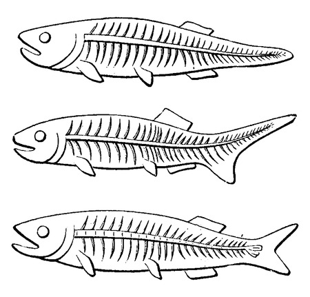Transformation of the tail of fish, vintage engraved illustration. Earth before man – 1886.