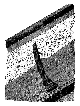 mines: Fossil trees has found 217 meters deep (Anzin mines), vintage engraved illustration. History of France – 1885.