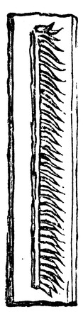 Monograptus, vintage engraved illustration. Earth before man – 1886.