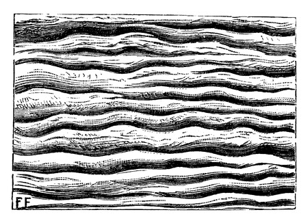 rock layer: Ripples left by water and petrified, vintage engraved illustration. Earth before man – 1886. Illustration