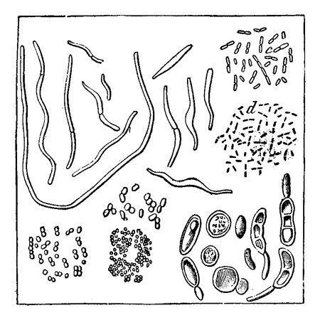 Atmospheric germs, magnified 1000 times in diameter, a, b. vibrio, c, d. bacteria, f, g, h. Micrococcus various, i. torule varied, vintage engraved illustration. Earth before man – 1886.