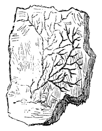 period: Older plants. Cambrian period. Petrifaction chondrite, vintage engraved illustration. Earth before man – 1886.