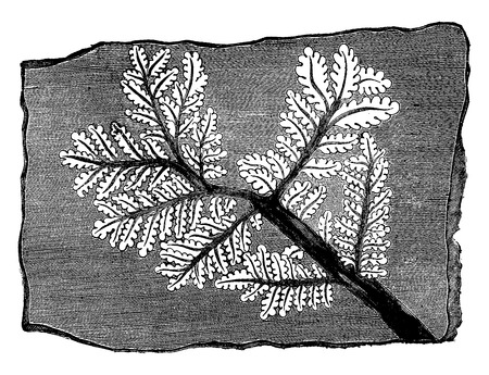 Trace fossil fern, vintage engraved illustration. Earth before man – 1886. 向量圖像