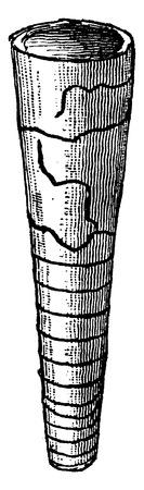 Orthoceras regulare, vintage engraved illustration. Earth before man – 1886.