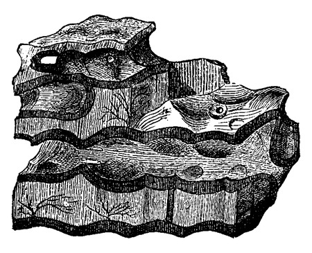 geological: The oldest sedimentary deposits, Laurentian shale, Eozoon canadense, vintage engraved illustration. Earth before man – 1886.
