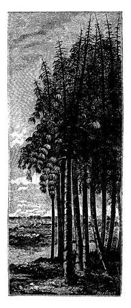 calamity: The first tree. Group calamities, vintage engraved illustration. Earth before man – 1886.