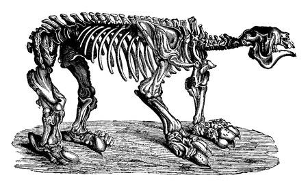 before: Megatherium, vintage engraved illustration. Earth before man – 1886. Illustration