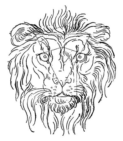 Leeuw, vintage gegraveerde illustratie. Aarde voor de mens - 1886.