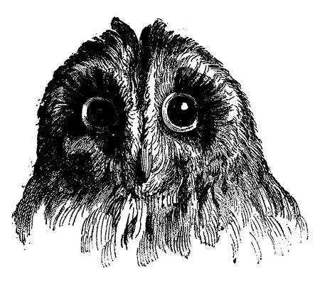 owl illustration: Owl, vintage engraved illustration. Earth before man – 1886. Illustration