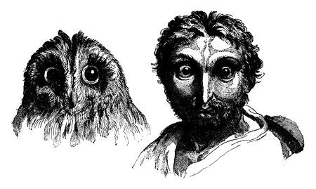 resemblance: Owl, vintage engraved illustration. Earth before man – 1886. Illustration