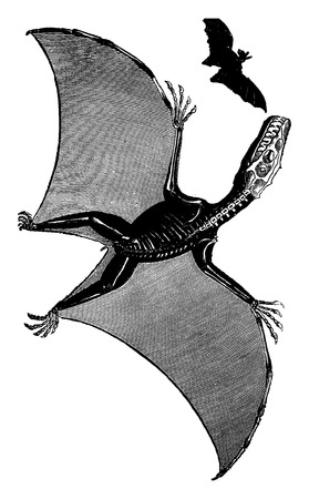 pterodactyl: Pterodactyl and bat, vintage engraved illustration. Earth before man – 1886.
