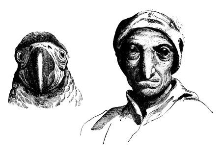 Parrot, vintage engraved illustration. Earth before man – 1886.