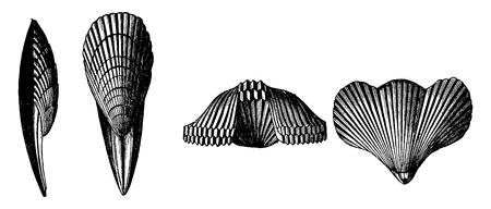 fossil: F�sil del Cret�cico, vintage grabado ilustraci�n. Tierra antes que el hombre - 1886.