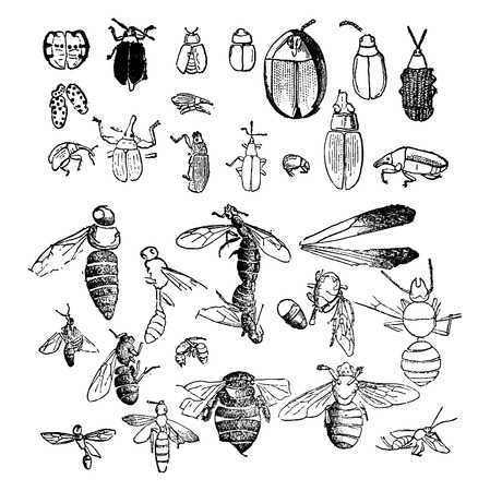 Insects from the Miocene period found in a fossil statevintage engraved illustration. Earth before man – 1886.