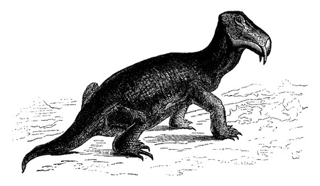 triassic: The dicynodont, reptile of the Triassic era (Southern Africa), vintage engraved illustration. Earth before man – 1886.