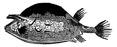 boxfish: Ostracion quadricornis, the fish of the Eocene period, vintage engraved illustration. Earth before man – 1886.
