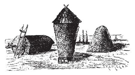 hay: Hay stacks, vintage engraved illustration.