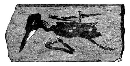 montmartre: Bird fossils found in Montmartre, vintage engraved illustration. Earth before man – 1886. Illustration
