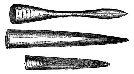 beaks: Vari becchi di belemniti Giurassico, vintage illustrazione inciso. Terra prima che l'uomo - 1886.