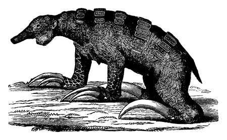 toothless: The Megalonyx, toothless mammal quaternary the Americas, vintage engraved illustration. Earth before man – 1886. Illustration