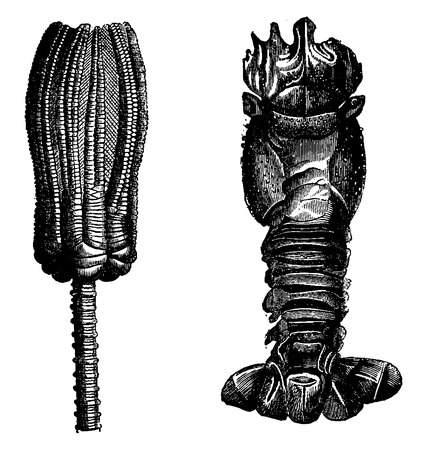 Fig.275. Echinoderms and Crinoids, Fig. 276. Crustaceans Triassic period, vintage engraved illustration. Earth before man – 1886.