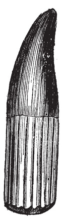 before: Ichthyosaur tooth, vintage engraved illustration. Earth before man – 1886.