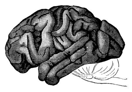 before: Brain chimpanzee, vintage engraved illustration. Earth before man – 1886. Illustration