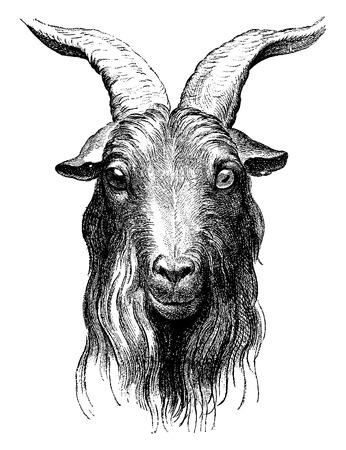 goat head: Goat, vintage engraved illustration. Earth before man – 1886.