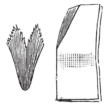 papel filtro: Forma secundaria a doblar el papel de filtro, ilustraci�n de la vendimia grabado.