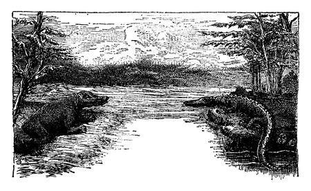 triassic: Triassic, vintage engraved illustration. Earth before man – 1886.