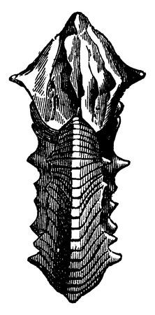before: Ammonite Margaritas, vintage engraved illustration. Earth before man – 1886. Illustration