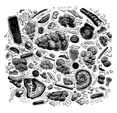 Fragment of chalk seen under a microscope, vintage engraved illustration. Earth before man – 1886. Stock Illustratie