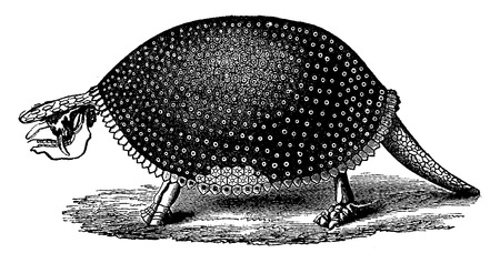 restored: Restored glyptodon (South America) skeleton, vintage engraved illustration. Earth before man – 1886. Illustration