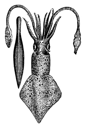 Current cuttlefish and ossicles, vintage engraved illustration. Earth before man – 1886.