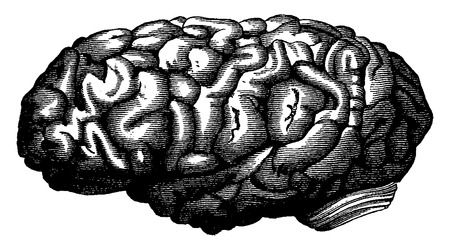 Brain mathematician Gauss, vintage engraved illustration. Earth before man – 1886. Ilustração