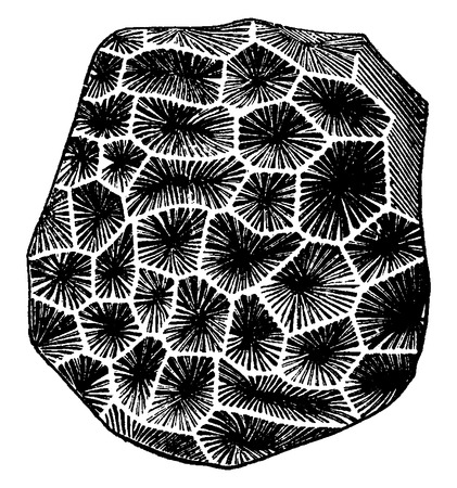 Latomeandra Davidsoni, vintage engraved illustration. Earth before man – 1886.