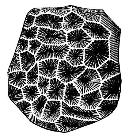 before: Latomeandra Davidsoni, vintage engraved illustration. Earth before man – 1886.