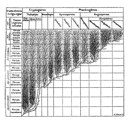 植物界の家系図、ヴィンテージには、図が刻まれています。地球人の â € の前に「1886。  イラスト・ベクター素材